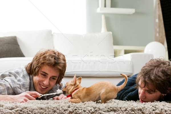 Two young men playing with a pet chihuahua Stock photo © Giulio_Fornasar