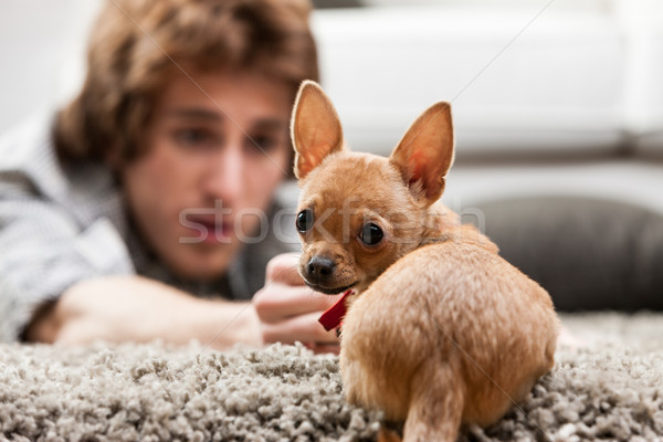 Cute little chihuahua looking back at the camera Stock photo © Giulio_Fornasar