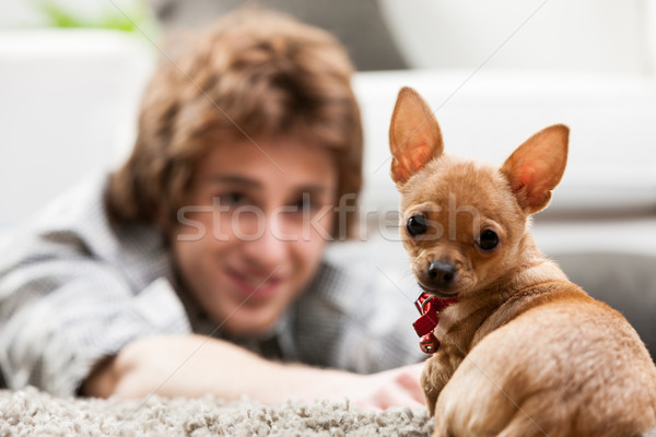 Curious little chihuahua looking at the camera Stock photo © Giulio_Fornasar