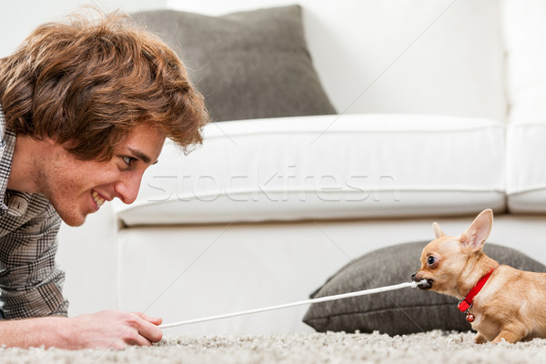 Cute little chihuahua testing its strength Stock photo © Giulio_Fornasar