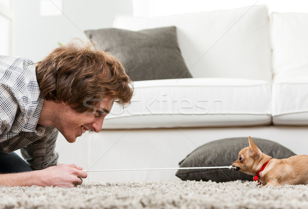 Young man having fun with his pet chihuahua Stock photo © Giulio_Fornasar