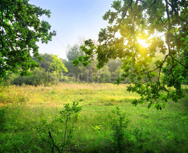 ストックフォト: 森林 · 風景 · 光 · 夏 · 日の出