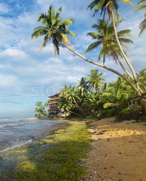 árnyékok tengerpart pálmafák indiai óceán Sri Lanka Stock fotó © Givaga