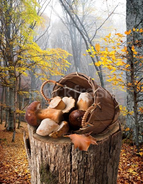 Mushrooms on stump Stock photo © Givaga