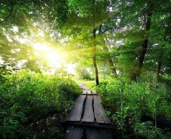 Wooden bridge in the forest Stock photo © Givaga