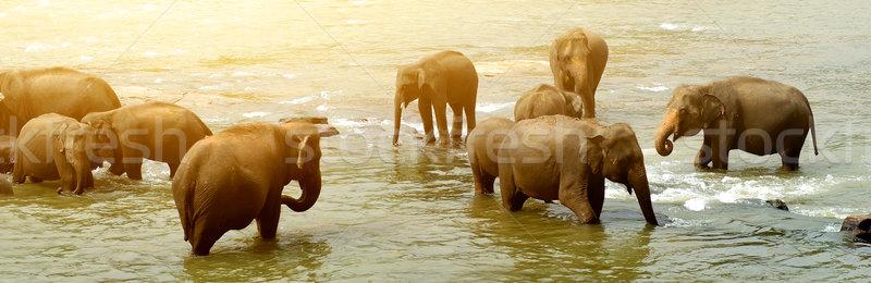 Big bathing elephants Stock photo © Givaga