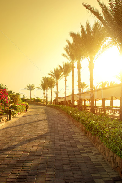 Seafront in Egypt Stock photo © Givaga