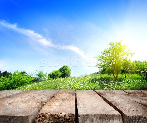 Mező fapadló pitypangok zöld legelő napfény Stock fotó © Givaga