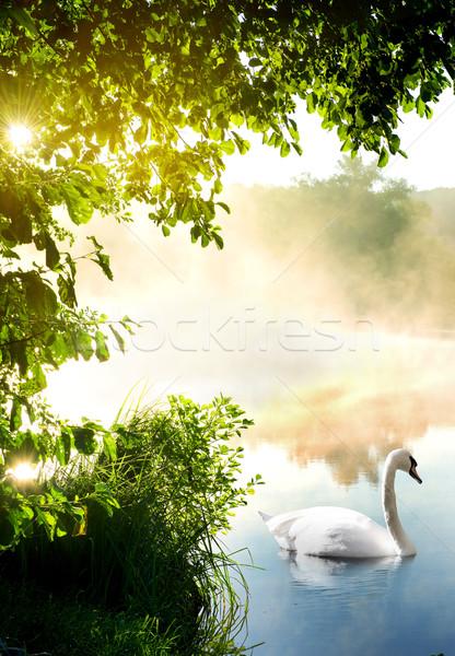 лебедя утра белый реке воды природы Сток-фото © Givaga