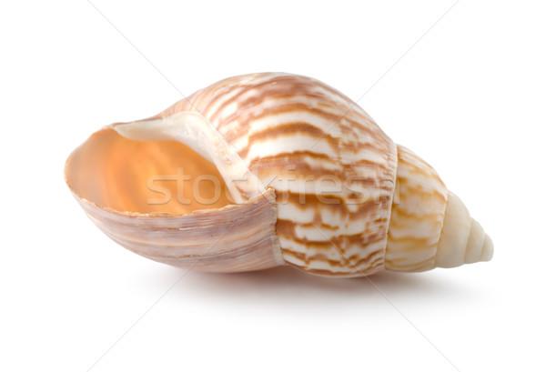 Sea shell Stock photo © Givaga