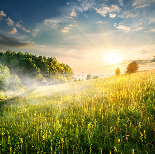Morning over blossoming field Stock photo © Givaga