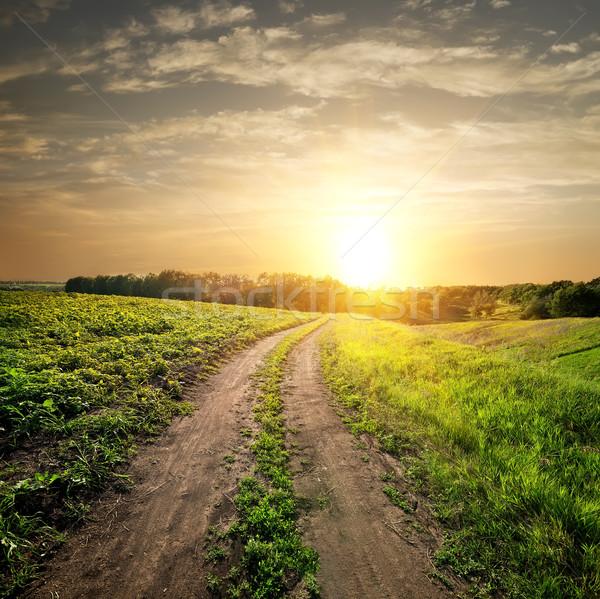 Pôr do sol estrada rural campo jovem girassóis céu Foto stock © Givaga