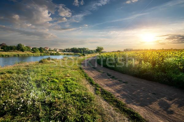 Napraforgók vidéki út folyó naplemente fa tavasz Stock fotó © Givaga