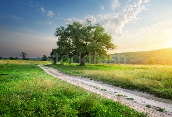 Footpath in field Stock photo © Givaga