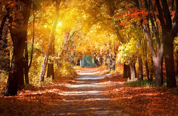 Sikátor ősz park napfény fű út Stock fotó © Givaga