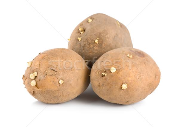 Three raw potatoes Stock photo © Givaga