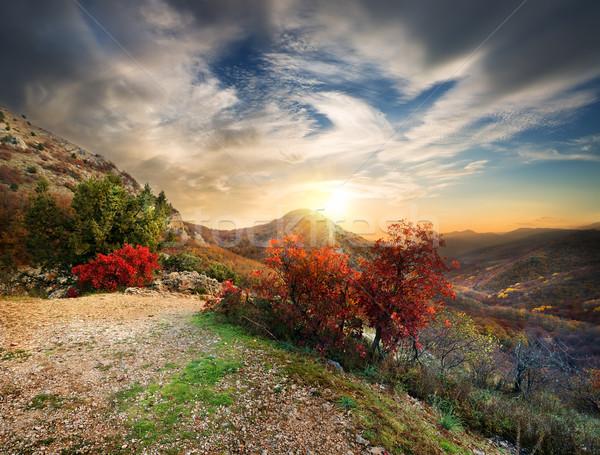 Outono montanhas tarde pôr do sol grama floresta Foto stock © Givaga
