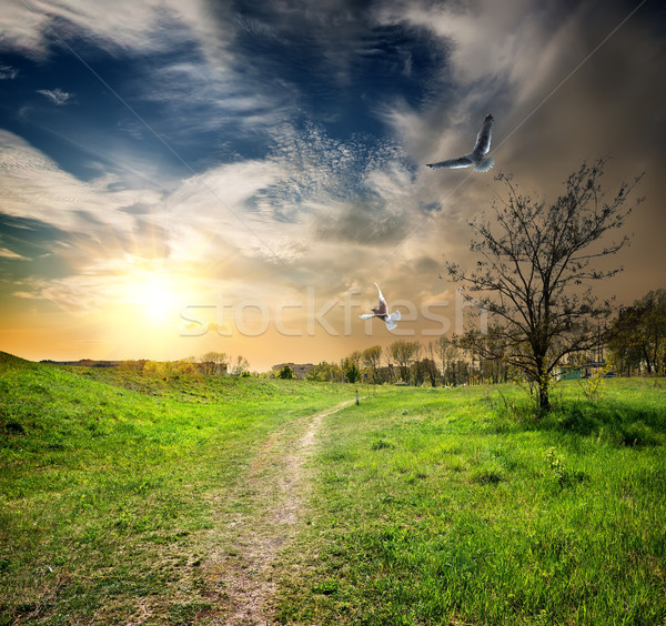 Country road and birds Stock photo © Givaga
