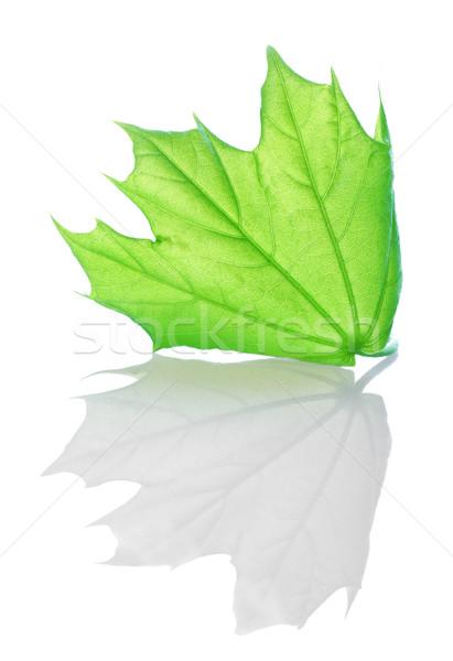 Green maple Stock photo © Givaga