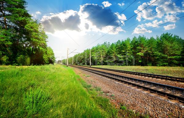 Ferrovia pinho floresta grama estrada Foto stock © Givaga