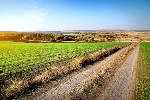 дороги зима зерновые области небе Сток-фото © Givaga