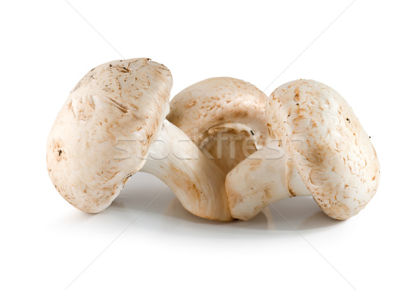 Three champignons isolated Stock photo © Givaga