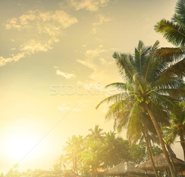 Pálmafák naplemente pálmafák tengerpart felhők nap Stock fotó © Givaga