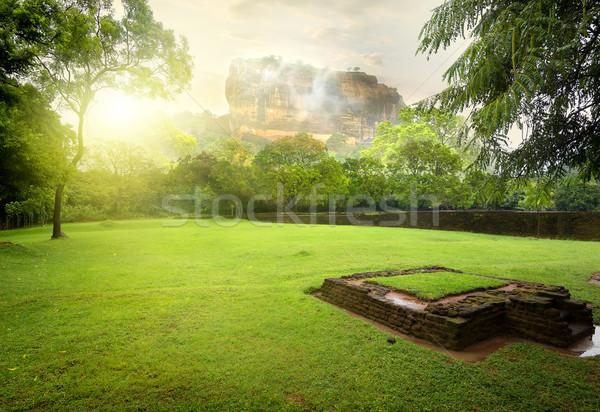 Prato erba verde montagna Sri Lanka albero sole Foto d'archivio © Givaga