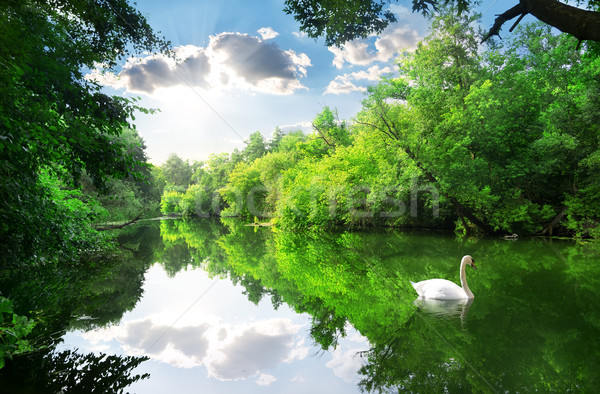 белый лебедя реке лет лес небе Сток-фото © Givaga