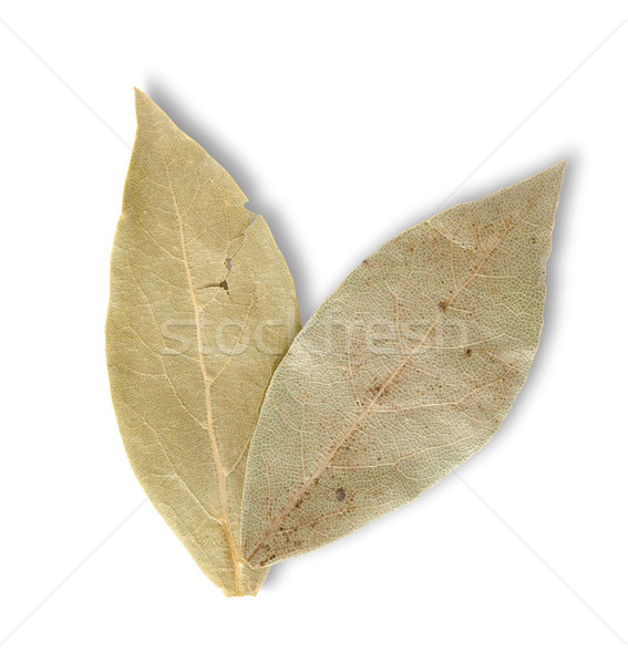 Two bay leaves Stock photo © Givaga