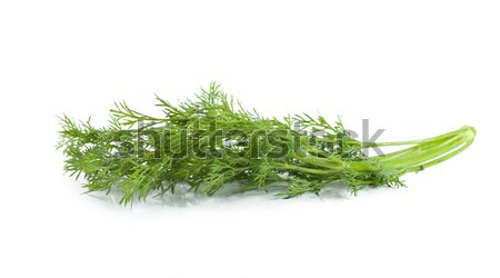 A branch of dill Stock photo © Givaga