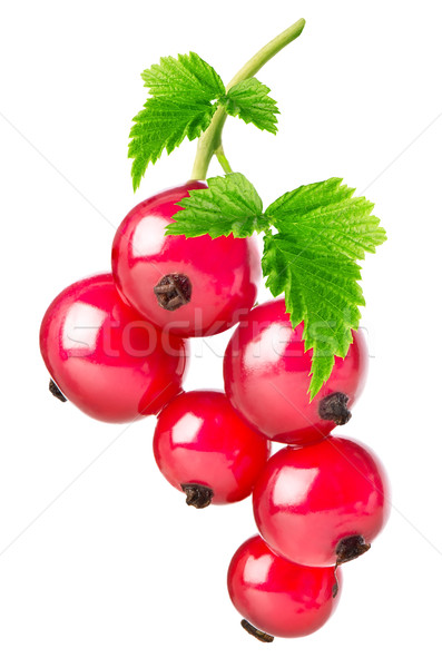 Red currant Stock photo © Givaga