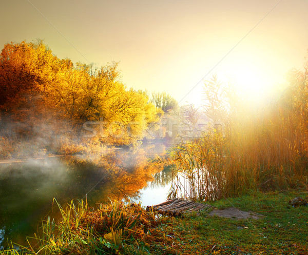 Fog in autumn Stock photo © Givaga