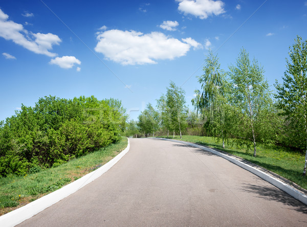 Asphalted road among birches Stock photo © Givaga