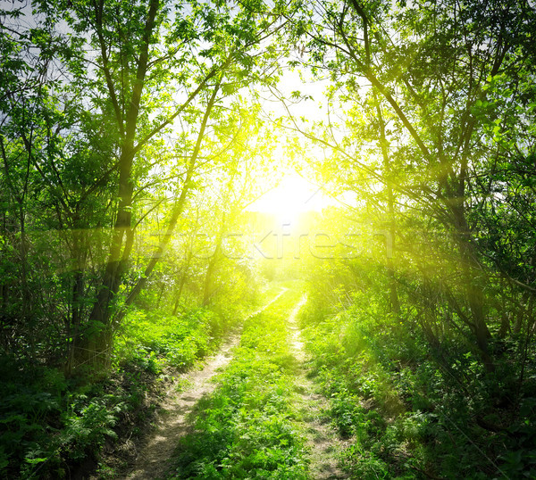 Country road and sunlight Stock photo © Givaga