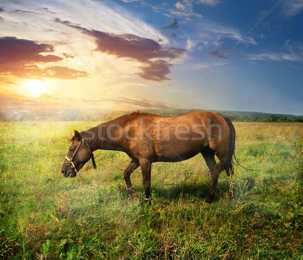 Horse on pasture Stock photo © Givaga