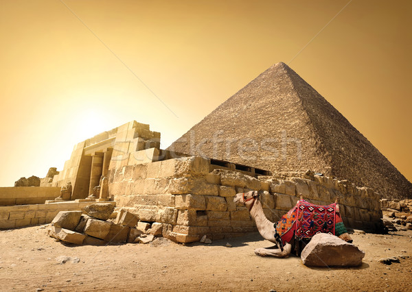 Camel and ruined pyramid Stock photo © Givaga