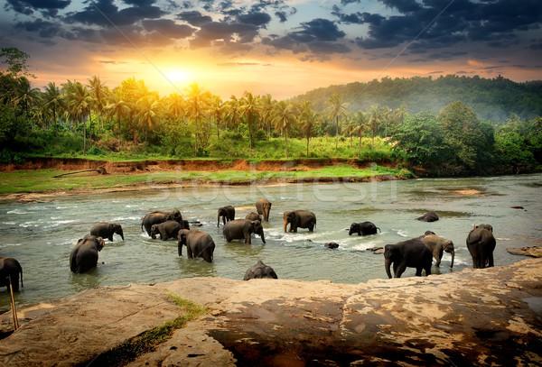 Слоны джунгли реке небе Сток-фото © Givaga