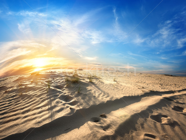 Footprints in desert Stock photo © Givaga