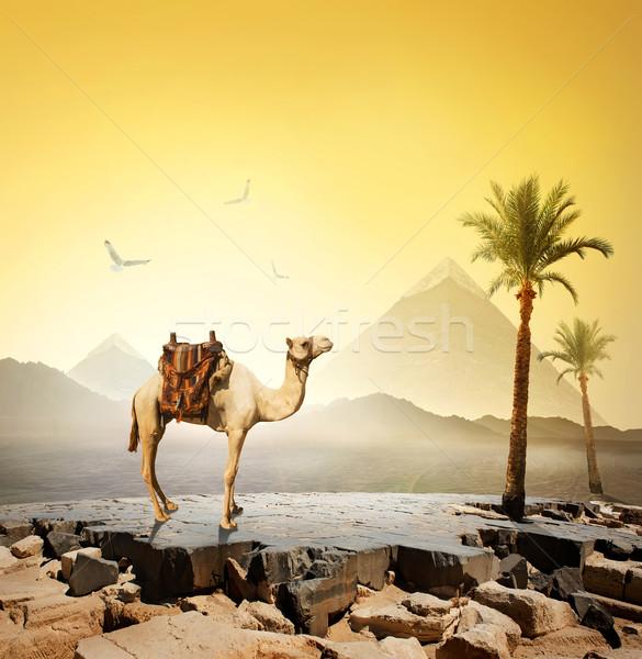 Camello aves pirámide cielo paisaje Foto stock © Givaga