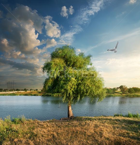 Bird over the osier near river Stock photo © Givaga