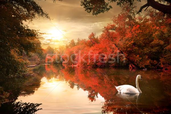 白鳥 川 日の出 ツリー 森林 日没 ストックフォト © Givaga