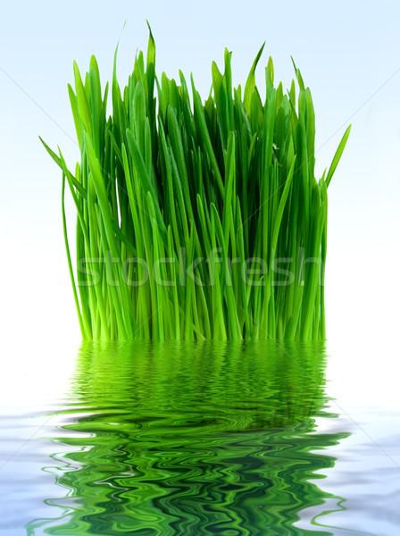 Grama verde azul água Foto stock © Givaga