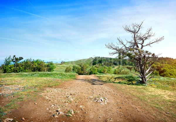 Zanderig weg veld bos gras zon Stockfoto © Givaga