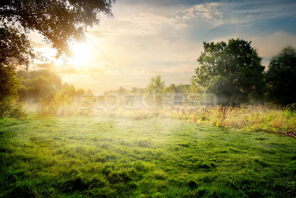 Clearing in the forest Stock photo © Givaga