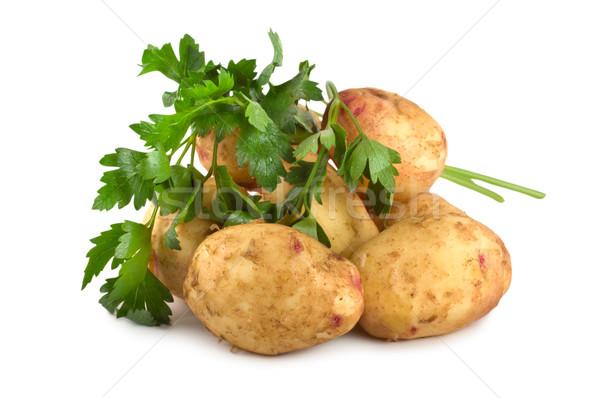 Potato and parsley Stock photo © Givaga