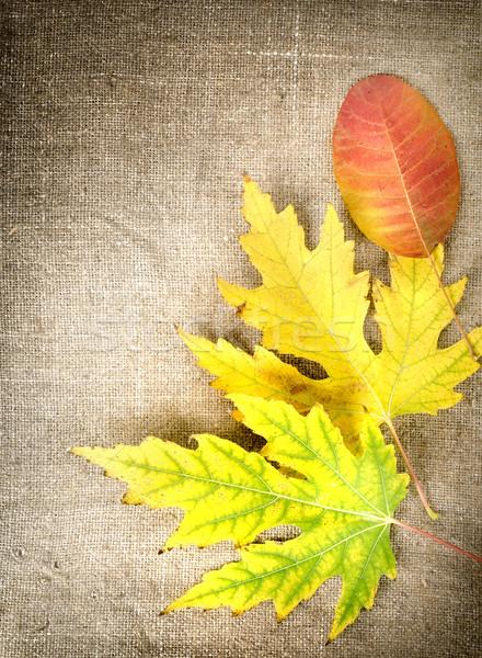 Jesienią dekoracji płótnie pozostawia brązowy tle Zdjęcia stock © Givaga