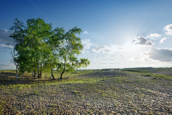 Bomen woestijn bewolkt hemel zonlicht zanderig Stockfoto © Givaga