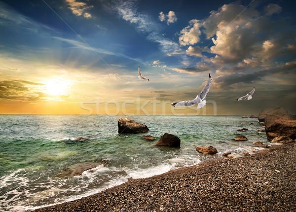 Seagull over sea Stock photo © Givaga