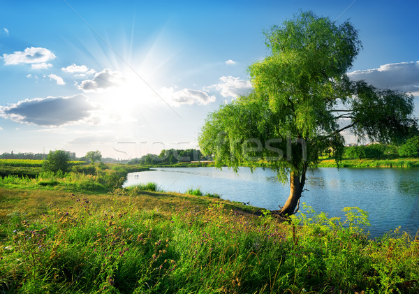 Near river Stock photo © Givaga